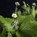 Strawberry blossom pendant, individually enamelled sterling silver flower necklace with glass beads