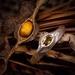 Golden tourmaline kōwhai seed ring