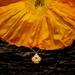 Iceland Poppy flower pendant