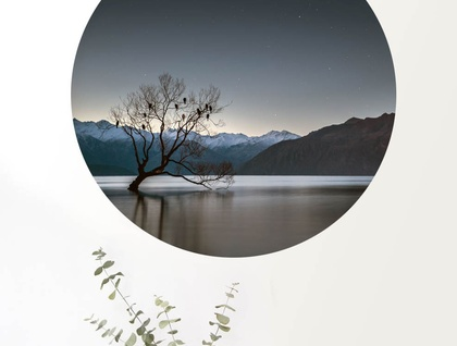 Wanaka tree in the lake vinyl wall dot size 58cm x 58cm