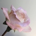 Realistic  flowers from polymer clay Roses