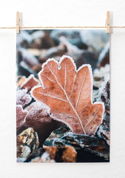Frozen Leaf  |  travel photography greeting cards